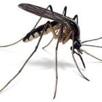 Le moustique est injuste, je le combats!